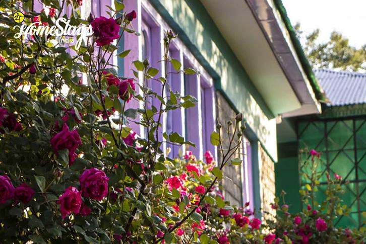 Garden2_Saryo-Homestay-Kalpa