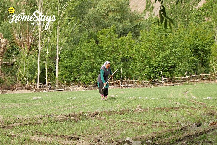 Farming-Temisgam Homestay-Leh