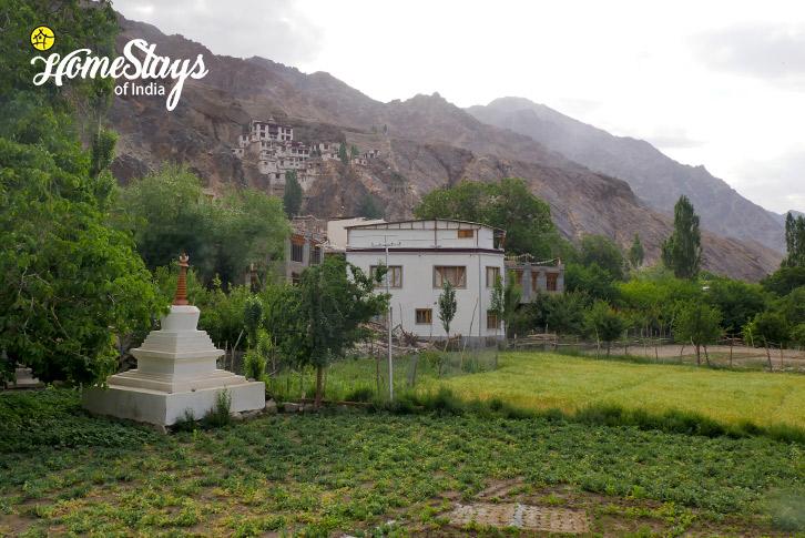 Farming_Skurbuchan Homestay-Ladakh