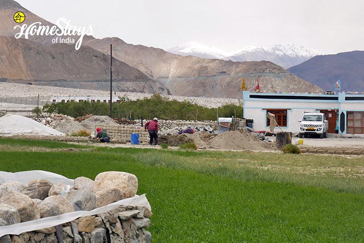 Farming-Merak Homestay-Pangong