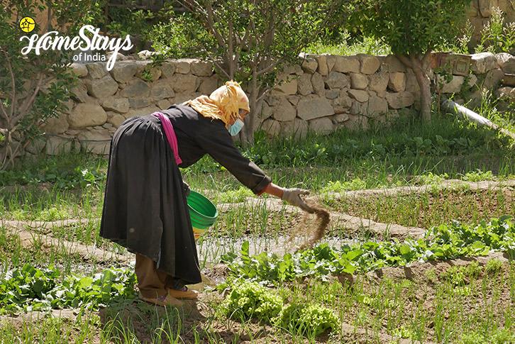 Farming-Thiksey Homestay-Ladakh