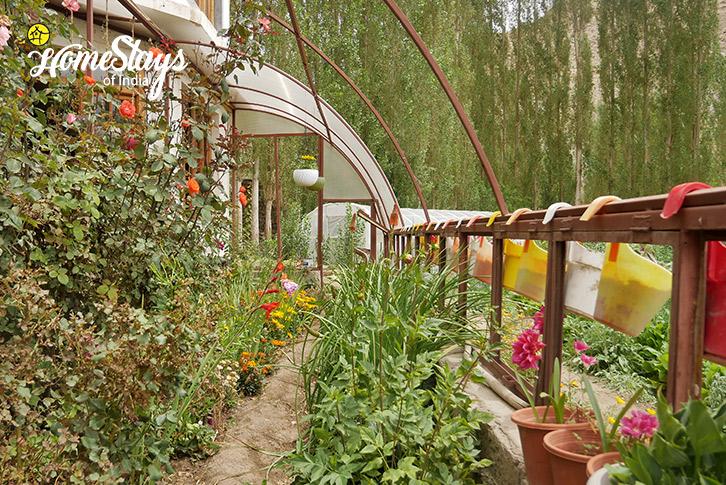 Flower House-Chubi Homestay-Leh