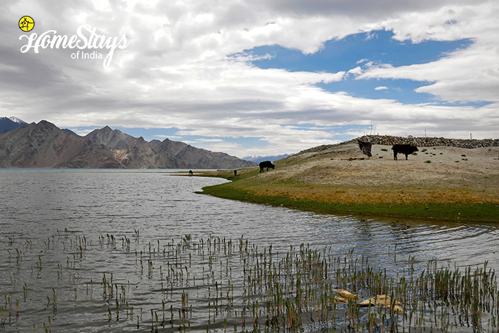 Lakeside-Merak Homestay-Pangong