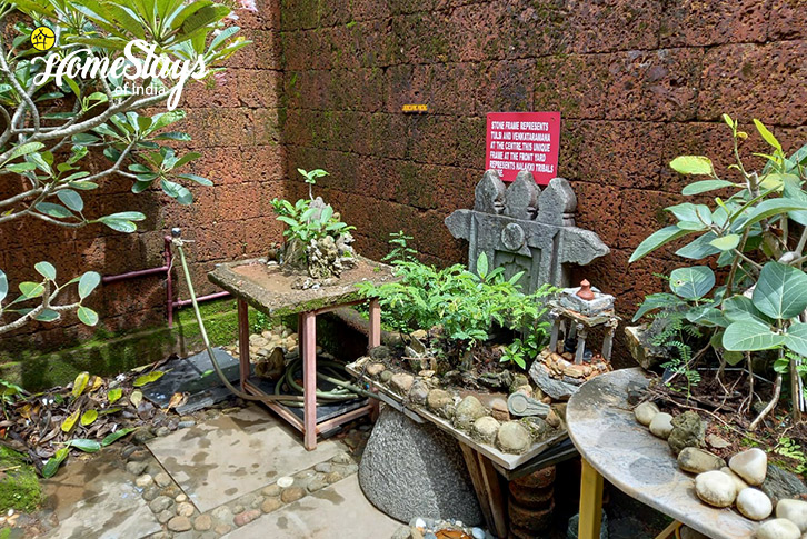 Plants-Ganesha Homestay-Gokarna
