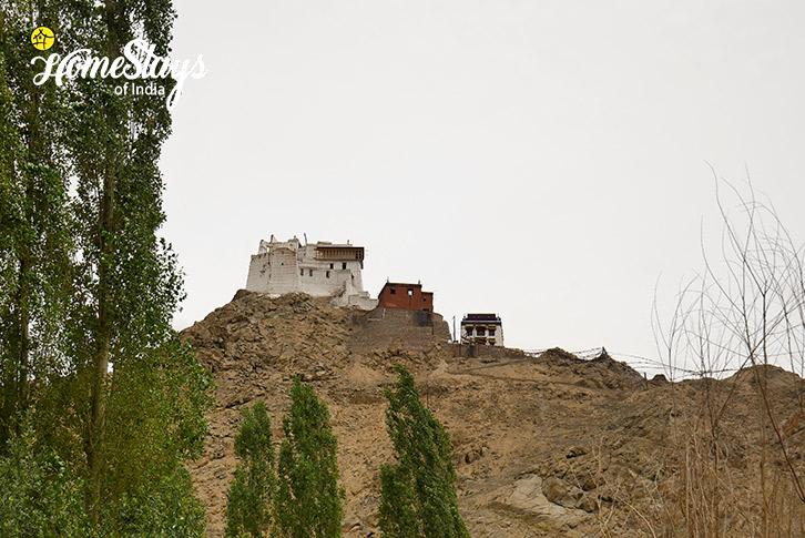 Tsemo Gompa-Chubi Homestay-Leh